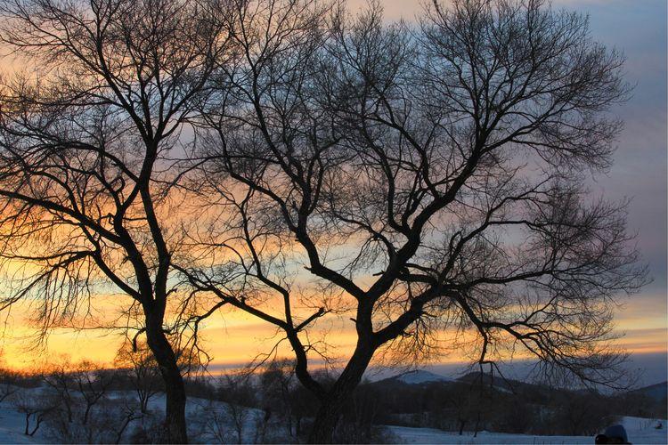 御道口草原森林风景区的冬,美成了一首关于风花雪月的诗!(图文)